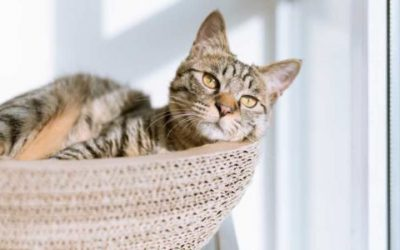 Cat Tree - The Answer for a Good Night's Sleep